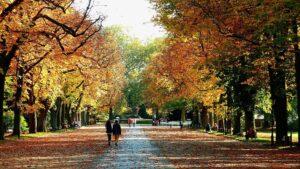 Herbstliche Allee mit Spaziergängern