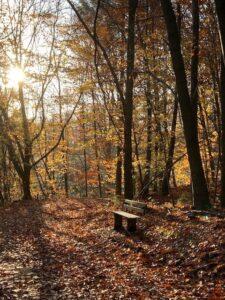 Morgens im Preuswald